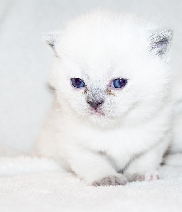 Cat, Puppy, Kitten, Fluffy, Kitty