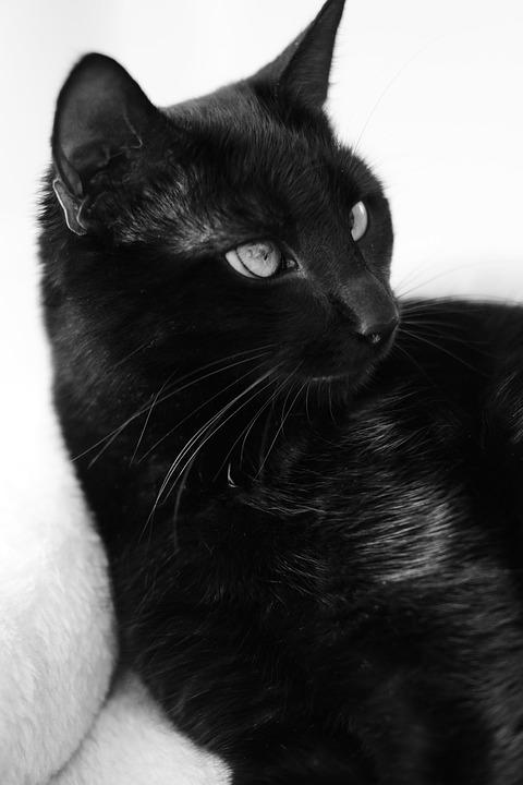 Cat, Animal, Fur, Predator, Eyes, Head, Portrait