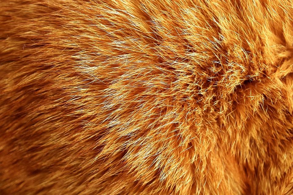 Cat Fur, Cat, Mackerel, Red, Tiger Cat, Kitten, Mieze