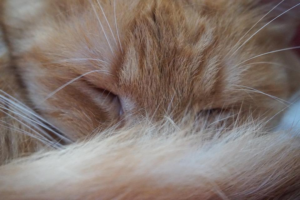 Cat, Cat Love, Cat Friend, Sleeping, Fur, Whiskers