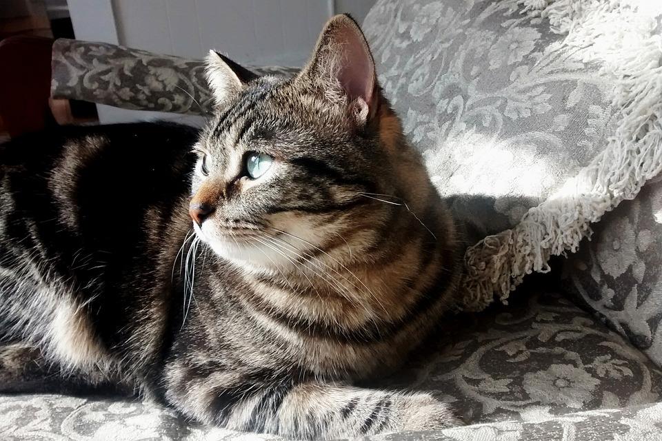 Cat, Kitten, Kitty, Sunshine, Tabby, Peaceful, Glance
