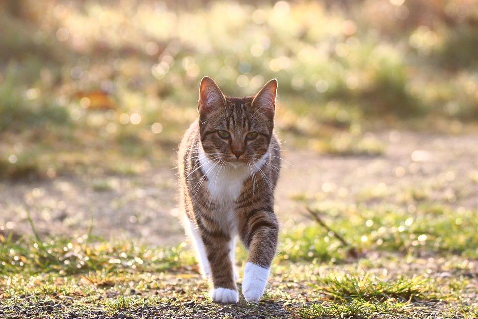 Cat, Morgentau, Grass, Kitten, Fog, Dewdrop, Meadow