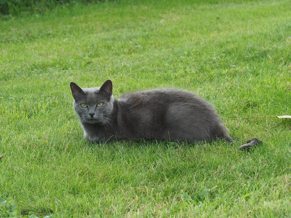 Cat, Garden, Pet, Mammal, Nature, Kitten, Grass, Green