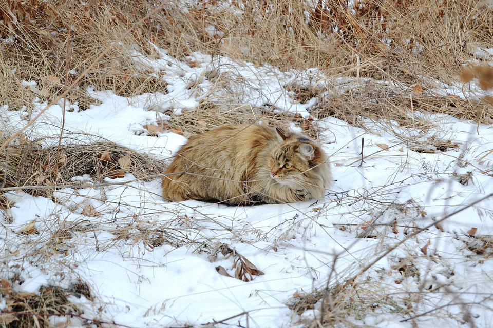 Cat, Winter, Grass, Snow, Frost, Cold