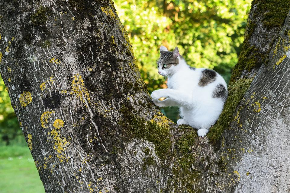 Cat, Tree, Green, Light