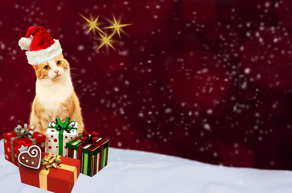 Christmas Card, Cat, Gifts, Greeting Card, Red, Gold