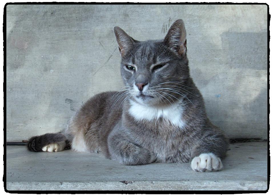 Cat, Black And White, Monochrome, Grey, Stone, Animal