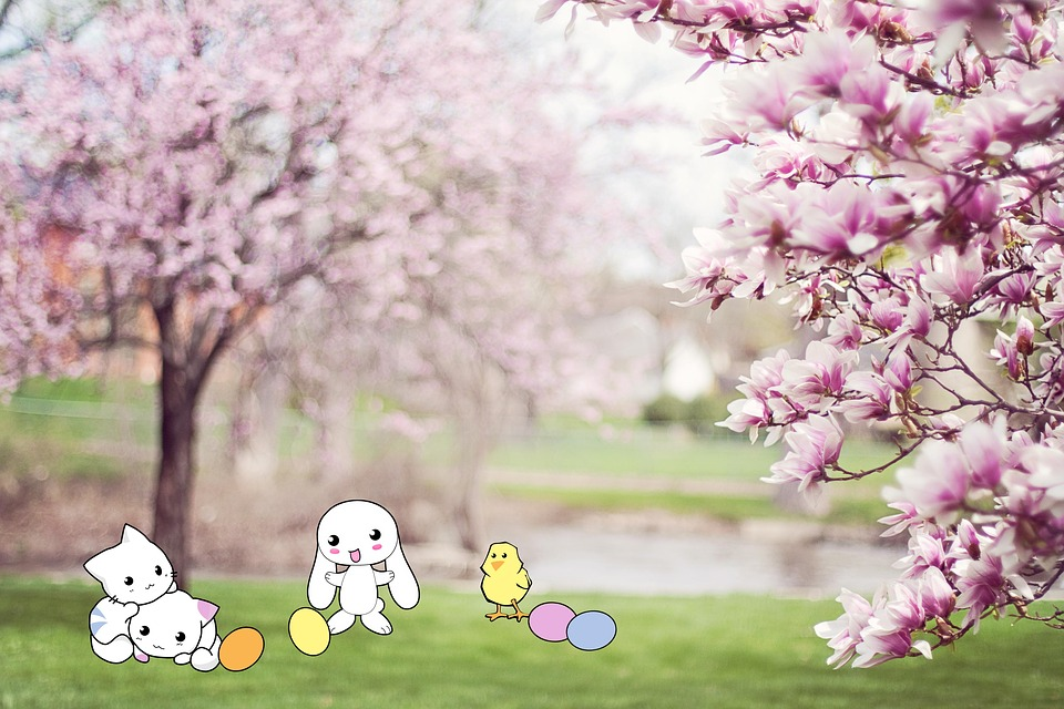Hare, Cat, Chicken, Easter, Cherry Blossoms, Spring