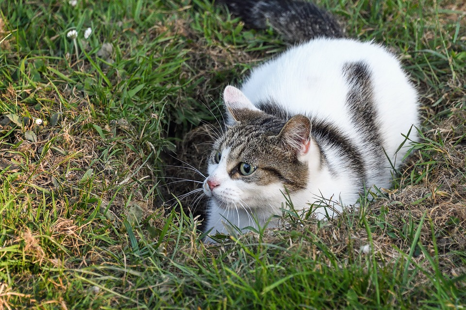 Cat, Lookout, Hole, Grass