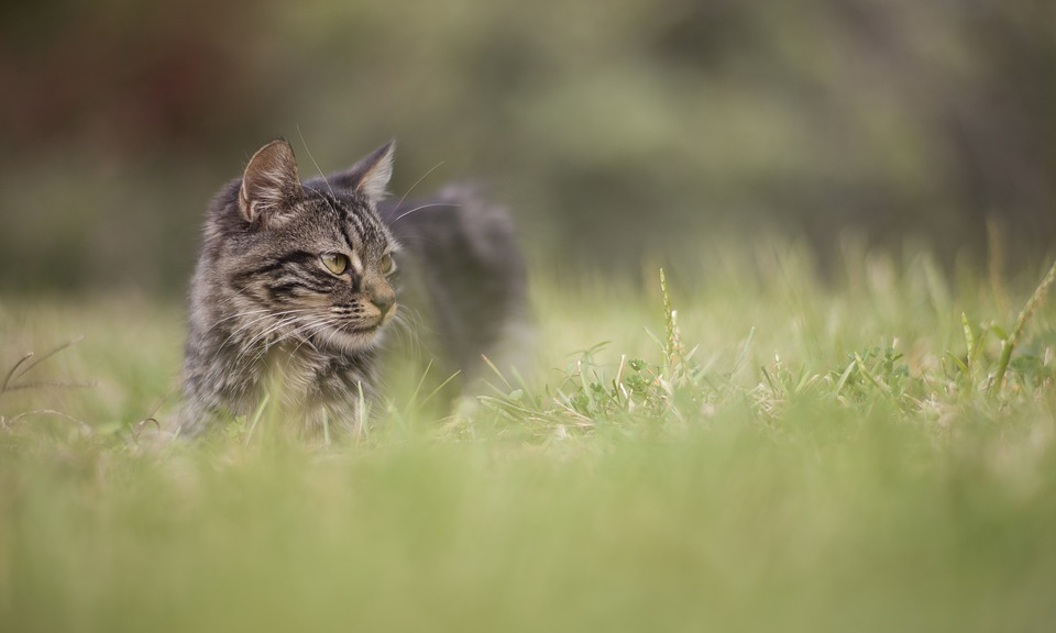 Cat, Grass, Animal, Overview, Baby Animal, Kitten