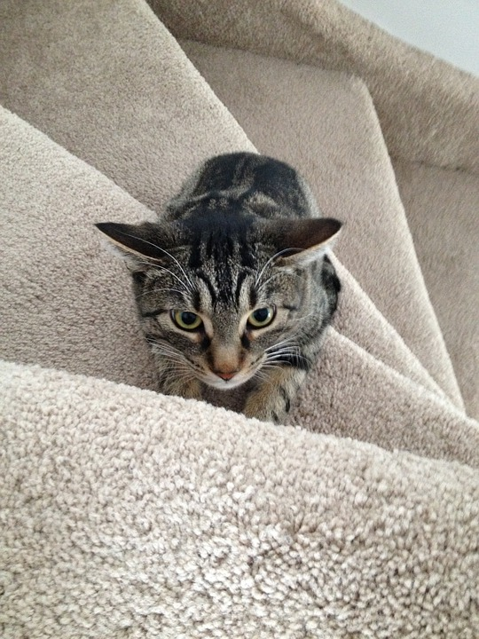 Cat, Stairs, Hunting, Cute, Feline, Kitty, Kitten