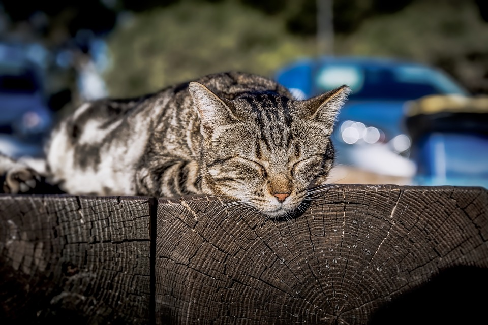 Cat, Sleeping, Sunbathing, Kitten, Lazy, Resting, Kitty