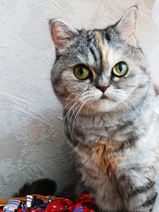 Cat, Nearby, Animal, Pets, Kitten