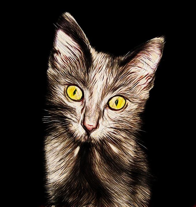 Cat, Kitten, Cute, Animals, Pet, Kittens, Home
