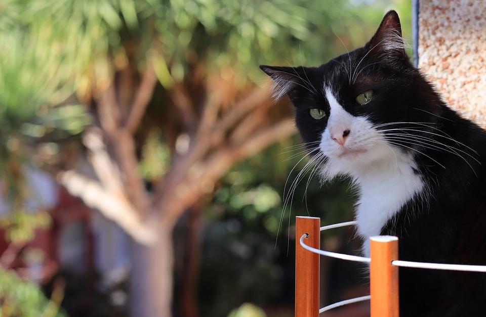 Cat, Cute, Pet, White, Black, Adorable, Kitty, Animal