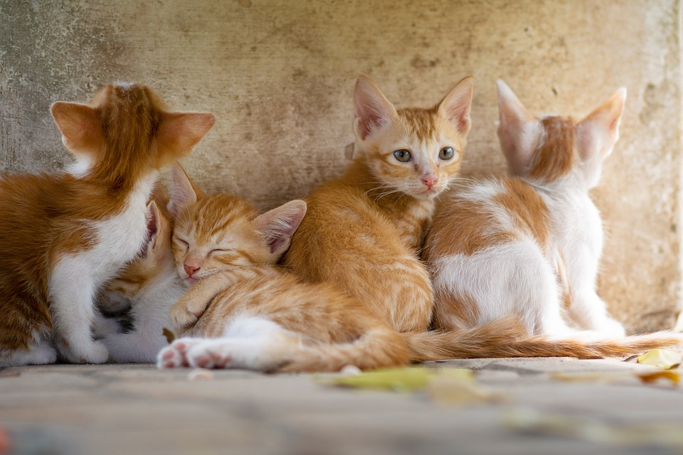 Cat, Animal, Kitty, Nature, Pet