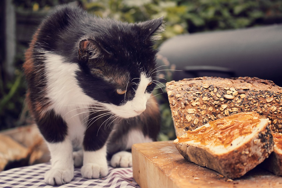 Cat, Bread, Wooden Board, Curious, Kitty