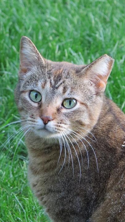 Cat, Feral, Feline, Animal, Outdoor, Domestic, Kitty