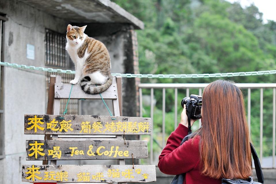 Cat, Taiwan, Photo, Landscape, Break, Cuteness, Kitty