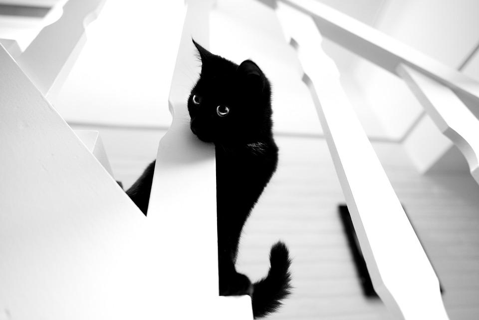 Black, Cat, White Stairs, Looking, Kitty, Kitten, Tail