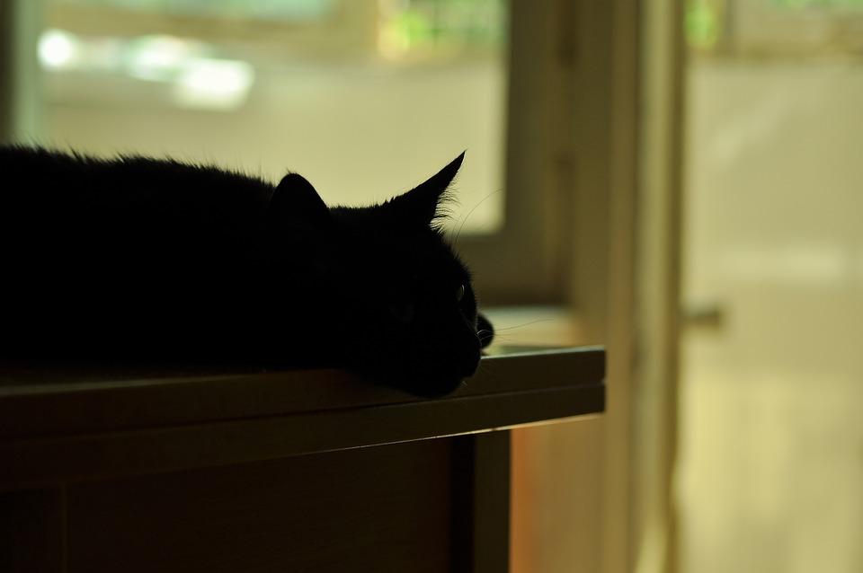 Silhouette, Cat, Table, Shadow, Light, Black, Lie
