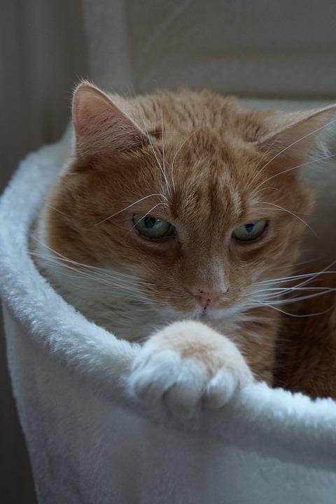 Cat, Kitten, Animal, Love For Animals, Cat Love