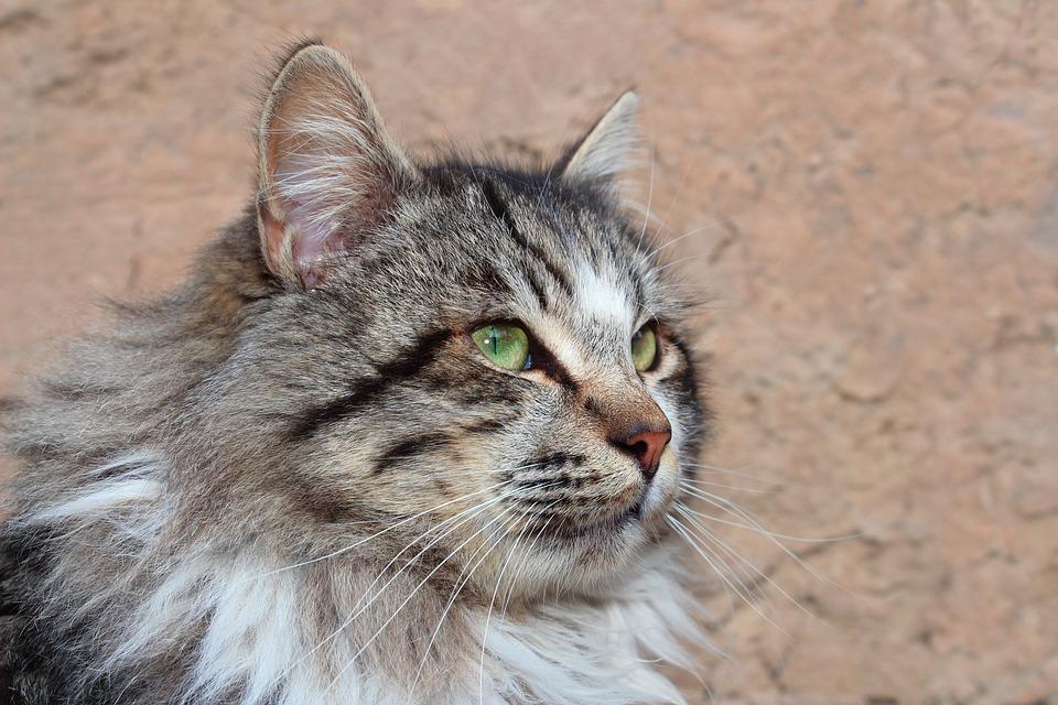 Animals, Cat, Cute, Mammals