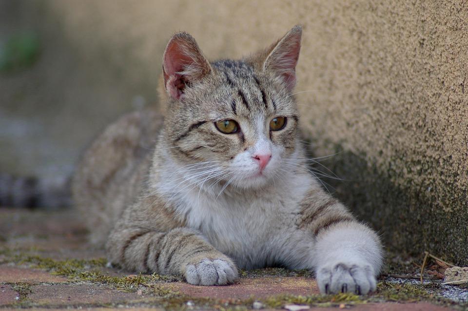 Animals, Charming, Cat, Mammals, Nature, Pets, Kitten