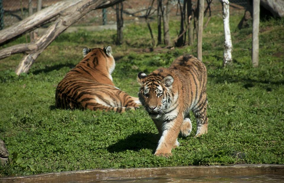 Wildlife, Cat, Animalia, Mammals