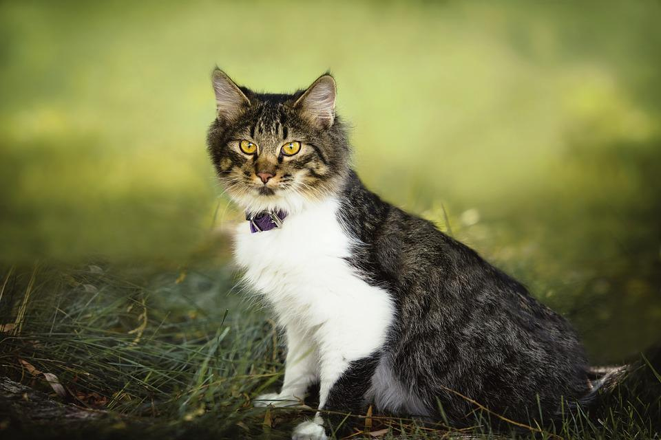 Cute, Animal, Nature, Cat, Mammal