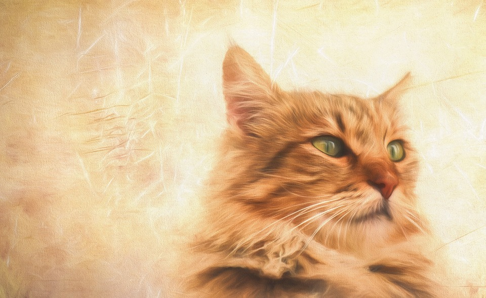 Paint, Painting, Artwork, Art, Draw, Cat, Animal, Pet