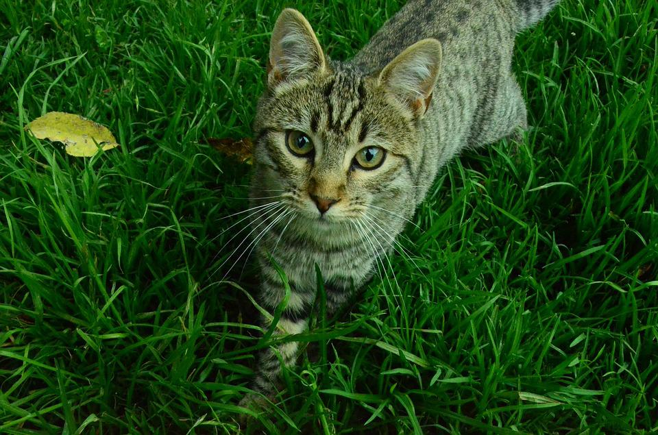 Cat, Nature, Feline, Animals, Pet, Cat Face, Whiskers