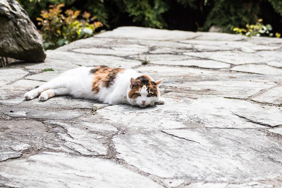Cat, Kitten, Pet, Domestic Cat, Animals, Mieze, Adidas