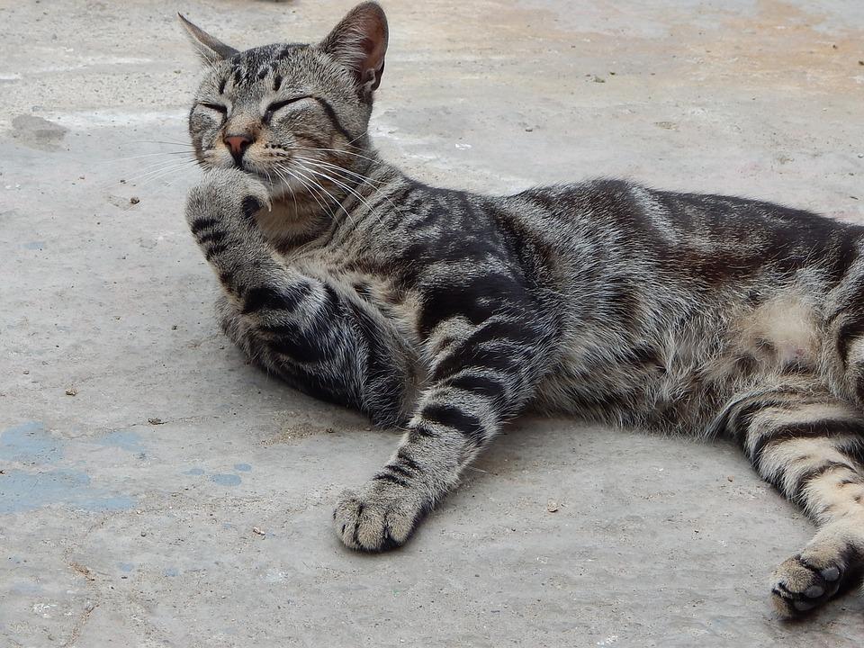 Pet, Cat, Thinking
