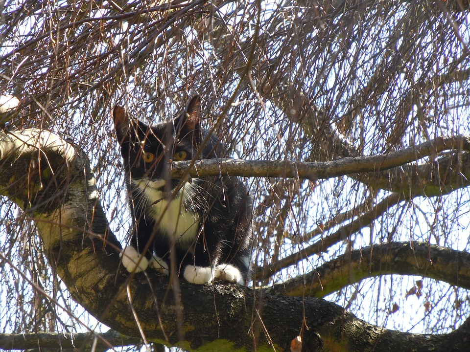 Cat, Tree, Cat In The Tree, Animals, Pets, Nature