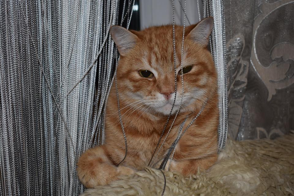 Cat, Redhead, Sitting, Curtain, Yarn, Hide, Portrait