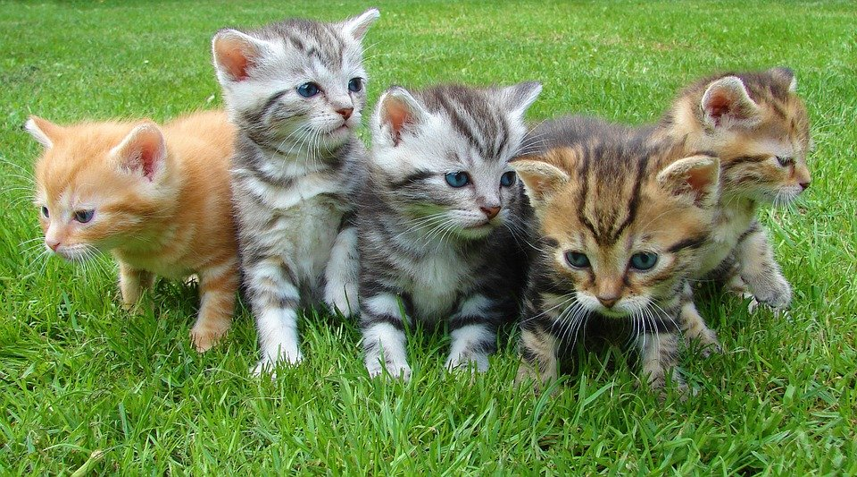 Kittens, Cat, Cat Puppy, Rush, Free Float, Kitten