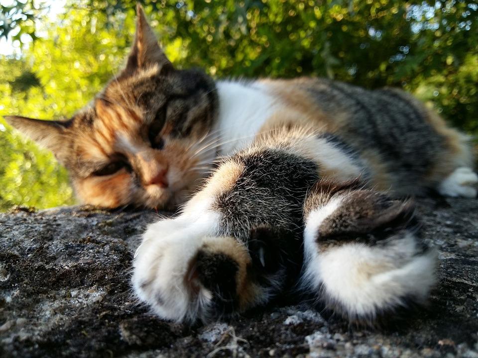 Cat, Asleep, Relaxation