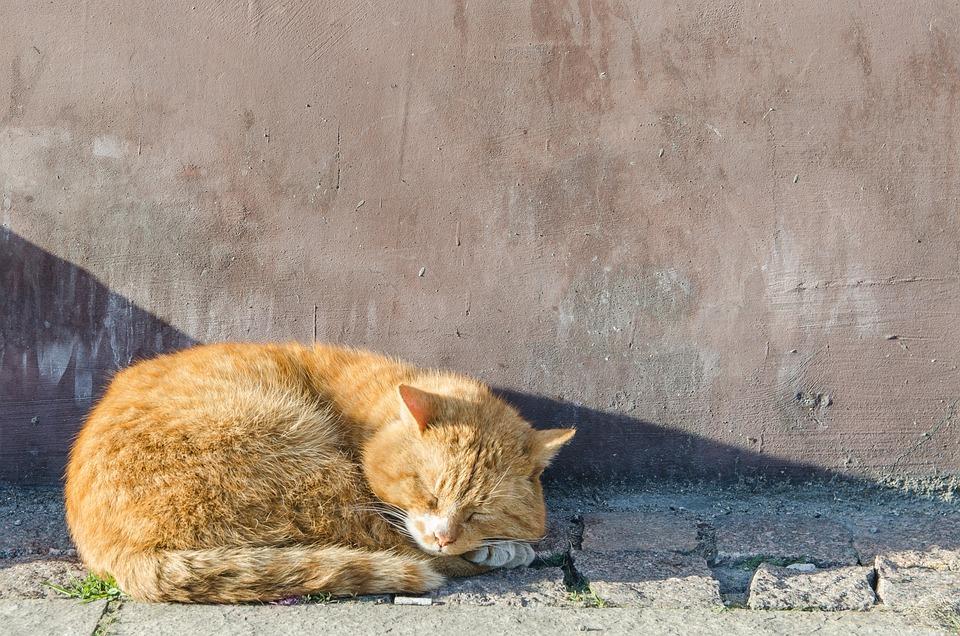 Cat, Peace Of Mind, Kitten, Animals, Relaxation, Sleep