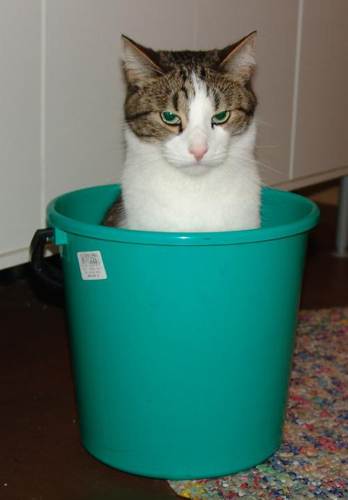Male, Cat, Bucket, Fun, Sad, Within, A Serious, Pet