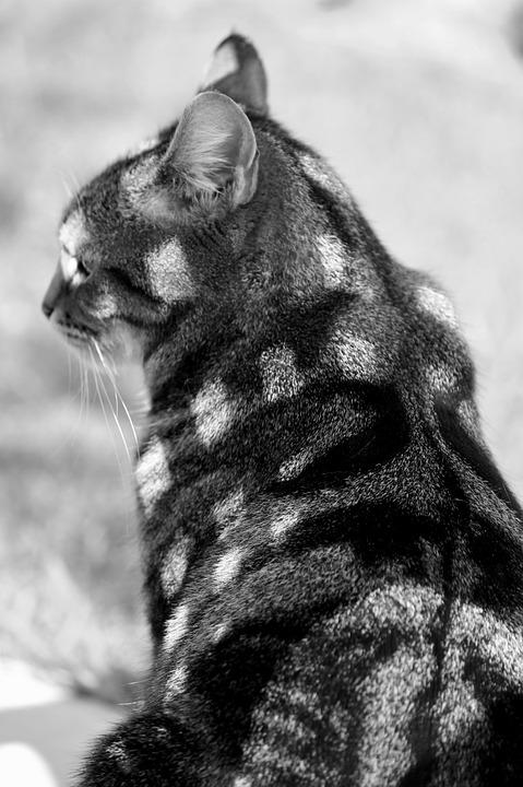 Cat, Fur, Chess Board, Pattern, Shadow, Shadow Play