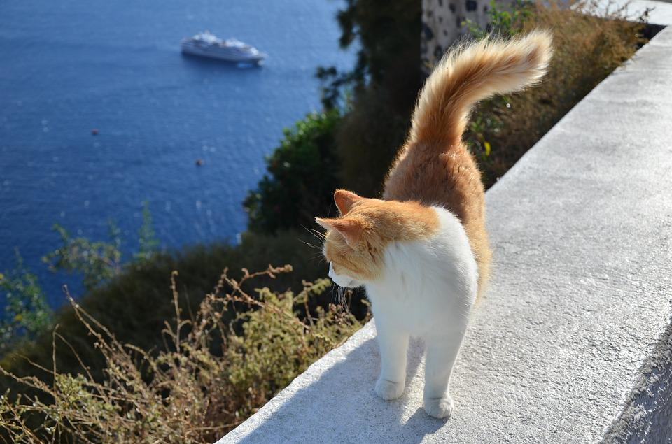 Cat, Greece, The Sea, Ship