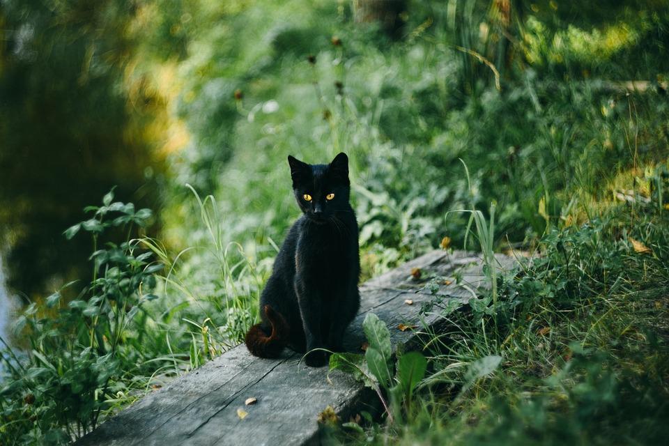 Cat, Black Cat, Outdoors, Sit, Sitting, Sitting Cat