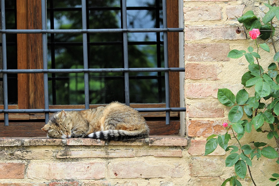 Cat, Sleeping, Siesta, Italy, Florence, Winery