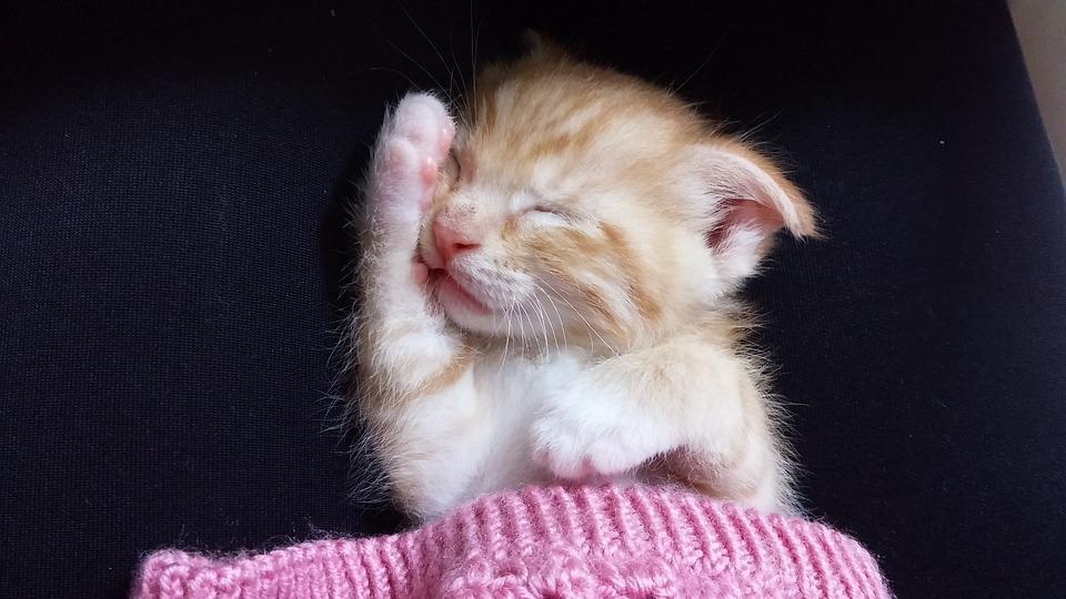Cat, Cute Kittens, Sleeping Cat, Sleep, Small, Paw