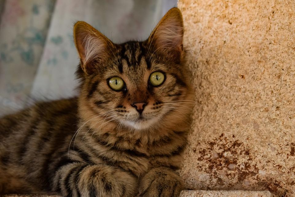 Cat, Stray, Outdoors, Animal, Cute, Looking, Eyes
