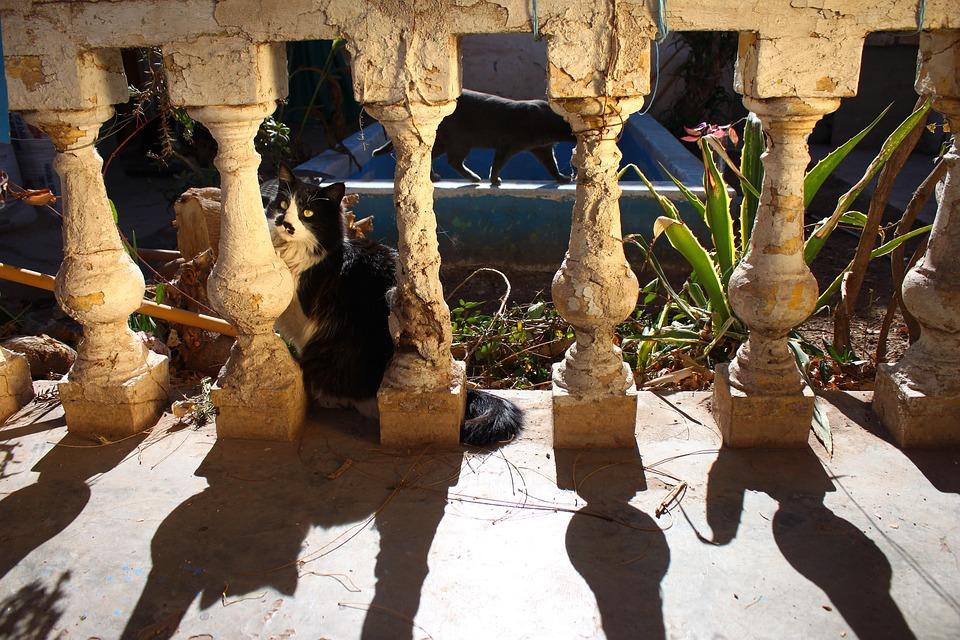 Shadow, Columns, Old, Cat, Shadows, Sun, Animals