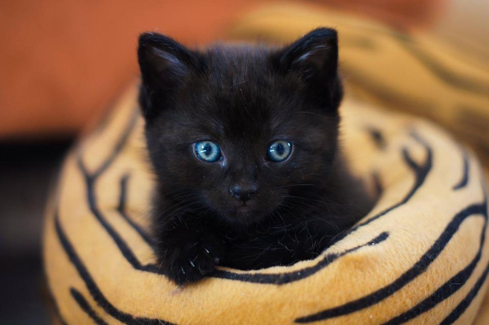 Cute, Mammal, Cat, Portrait, Cat Baby, Kitten, Sweet