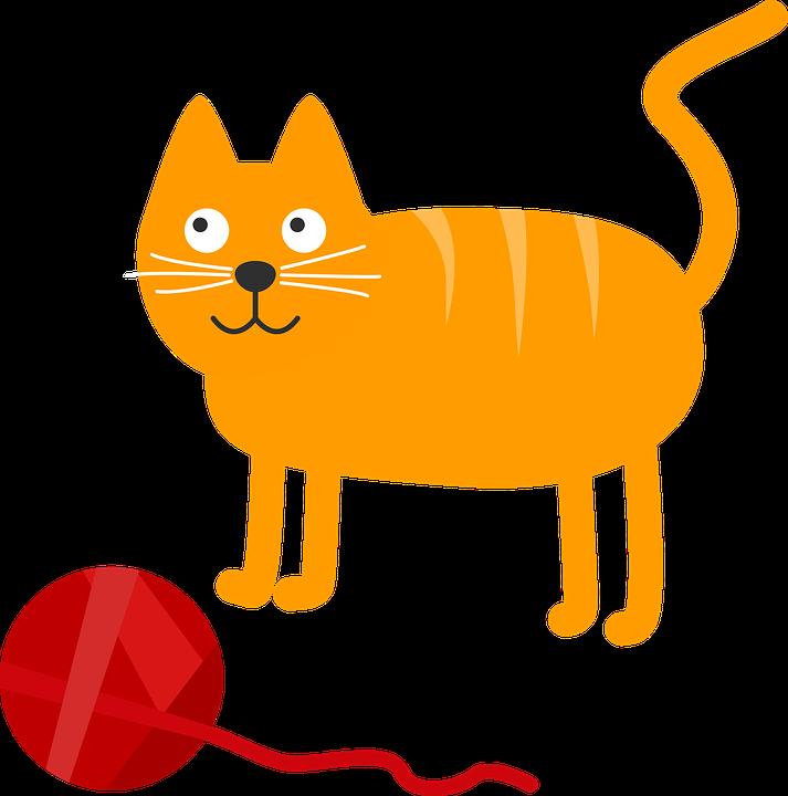 Cat, Cat's Cradle, Sweet, Animal, Pet, Cat's Eyes