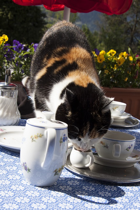 Cat, Sweet Tooth, Lick Out, Milk Bandit, Breakfast